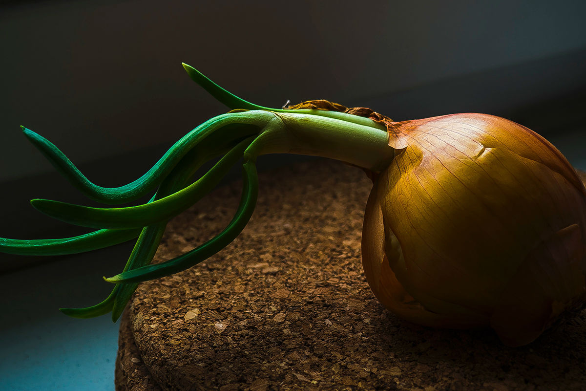 conservar cebola